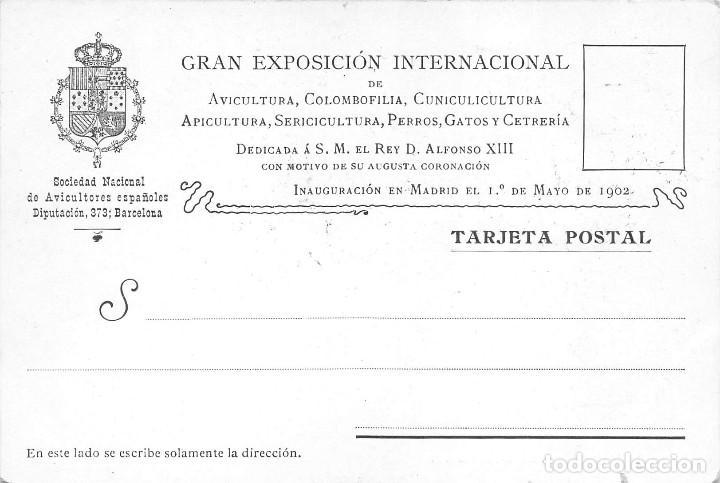 TARJETA POSTAL CON MOTIVO DE LA EXP. INTERNCAL DE COLOMBOFILIA, CUNICULTURA, PERROS, GATOS -AÑO 1902 (Postales - Postales Temáticas - Conmemorativas)