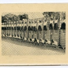 Coleccionismo deportivo: EDUCACIÓN FÍSICA (GIMNASIA) SECCIÓN FEMENINA DE FALANGE E.T. Y DE LA JONS, CIRCULADA EN 1943. Lote 186337623
