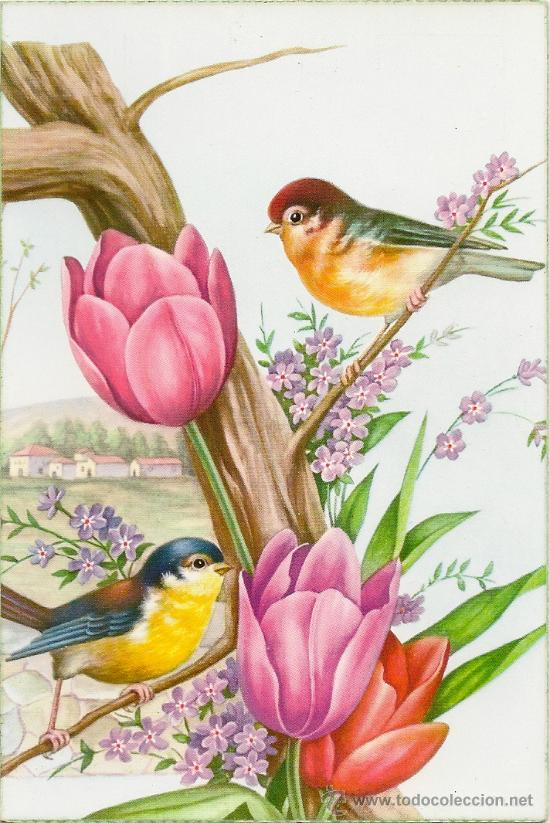 interesante postal preciosos pajaros con bonit  Comprar Postales