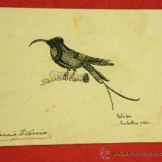 Postales: POSTAL CON DIBUJO DE COLIBRI FIRMA DE J. GARCÍA ELORRIO CASA VDA DE PONTES MADRID. Lote 36145569
