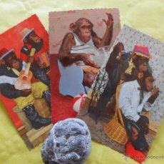 Postales: MONOS AÑOS 50. Lote 53593990