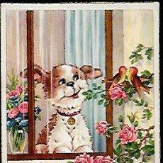 Postales: POSTAL * PERRITO MIRANDO UNOS PAJARITOS *SERIE 542 - 1952. Lote 124286175