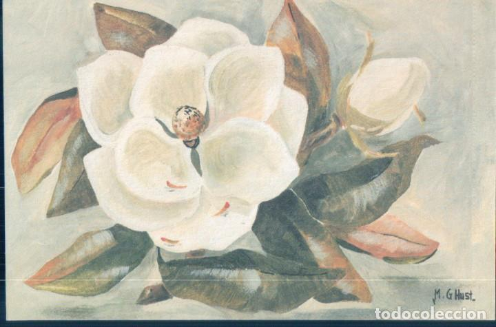 POSTAL DIBUJO FLOR BLANCA - COTTON FLOWER - ILUTRADA M G HUST - FIRMADA (Postales - Dibujos y Caricaturas)