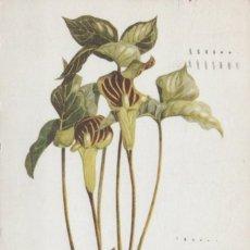 Postales: POSTAL PLANTA - RISAEM TRIPHYLLUM. Lote 198349535