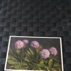 Postales: PRECIOSA POSTAL STZF FLORES Nº 305 - LA DE LA FOTO VER TODAS MIS POSTALES. Lote 223465023