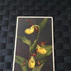 Postales: PRECIOSA POSTAL STZF FLORES Nº 282 - LA DE LA FOTO VER TODAS MIS POSTALES. Lote 223465881
