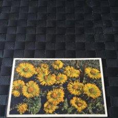Postales: PRECIOSA POSTAL FLORES Nº 1376 - LA DE LA FOTO VER TODAS MIS POSTALES. Lote 223466031