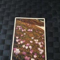 Postales: PRECIOSA POSTAL STZF FLORES Nº 258 - LA DE LA FOTO VER TODAS MIS POSTALES. Lote 223466412