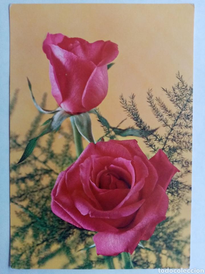 POSTAL ROSAS FLORES - EDICIONES CYZ (Postales - Dibujos y Caricaturas)