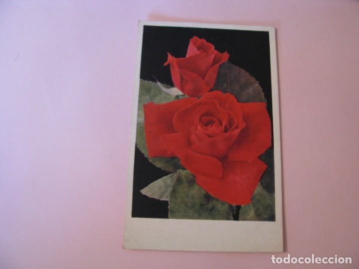 POSTAL DE FLORES. ROSAS (MCGREDYS SCARLET). INGLATERRA. (Postales - Dibujos y Caricaturas)