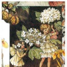 Postales: 7360B -CICELY MARY BARKER- HADA DE LAS FLORES (FLOWERS FAIRIES) CODE PC 6B2 -14,5X10,3 CM - NUEVA. Lote 277750973