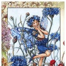 Postales: 7360B -CICELY MARY BARKER- HADA DE LAS FLORES (FLOWERS FAIRIES) CODE PC 6B3 -14,5X10,3 CM - NUEVA. Lote 277751168