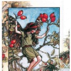 Postales: 7360B -CICELY MARY BARKER- HADA DE LAS FLORES (FLOWERS FAIRIES) CODE PC 6B6 -14,5X10,3 CM - NUEVA. Lote 277751763