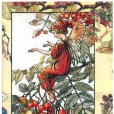 Postales: 7360B -CICELY MARY BARKER- HADA DE LAS FLORES (FLOWERS FAIRIES) CODE PC 6B8-14,5X10,3 CM - NUEVA. Lote 277752093