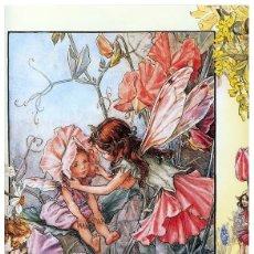 Postales: 7360B -CICELY MARY BARKER- HADA DE LAS FLORES (FLOWERS FAIRIES) CODE PC 6B9-14,5X10,3 CM - NUEVA. Lote 277752263