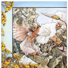 Postales: 7360B -CICELY MARY BARKER- HADA DE LAS FLORES (FLOWERS FAIRIES) CODE PC 6B10-14,5X10,3 CM - NUEVA. Lote 277752548