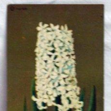 Postales: POSTAL HOLANDESA CON FLOR PUBLICIDAD BULBOS FLORES JA VERLOOY. Lote 5377699