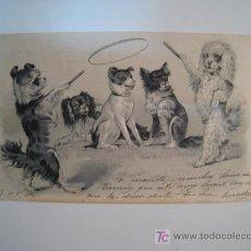 Postales: POSTAL ILUSTRADA PERROS ACROBATAS (CIRCULADA 1901). Lote 11990962
