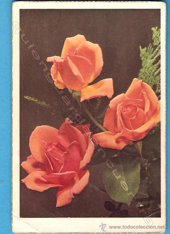Postales: Lote 7 postales CyZ 559/A-548/B-575/B-556/A-553B y dos sin distintivo - Foto 2 - 26509210