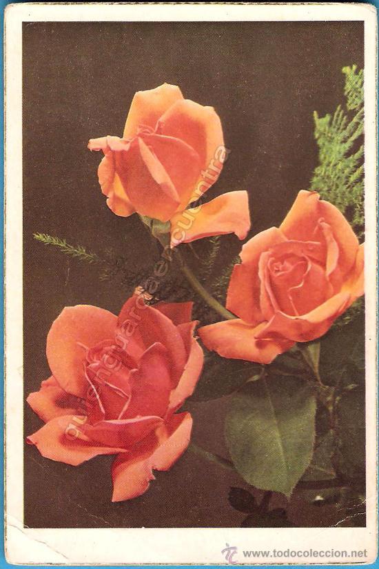 POSTAL CYZ SERIE 548/B NUEVA, AÑOS 50 (Postales - Postales Temáticas - Dibujos originales y Grabados)