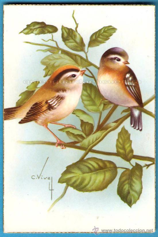 Postales: 2 postales pájaros CyZ años 50 nuevas 550/B dibujo de Carles Vives. - Foto 2 - 28356052