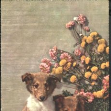 Postcards - DOS CACHORROS DE PERRO 1956 - 40848317