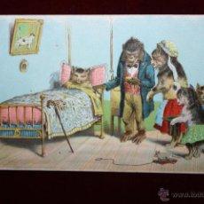 Postales: POSTAL HUMORISTICA DE LOS AÑOS 50-60. ANIMALES. SIN CIRCULAR. Lote 47692993
