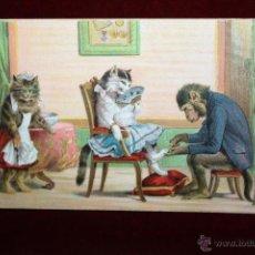 Postales: POSTAL HUMORISTICA DE LOS AÑOS 50-60. ANIMALES. SIN CIRCULAR. Lote 47693023