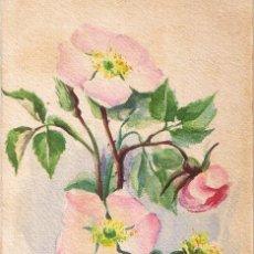 Postcards - POSTAL M. SERRA. ROSAS SILVESTRES. PINTADA A MANO. CIRCULADA 1914 - 54038129