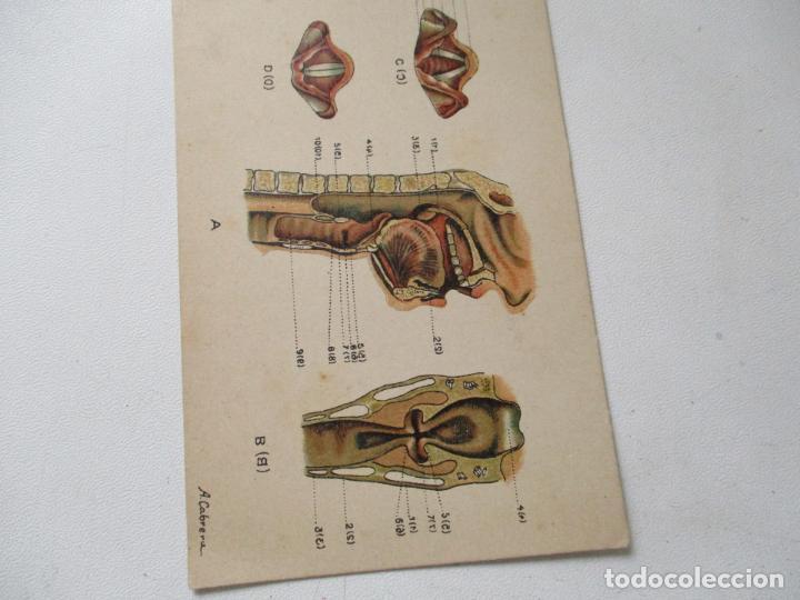 cromo litografía de anatomía-serie vi, nº. 1-lo - Comprar Postales ...