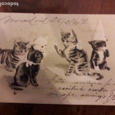 Postales: POSTAL ANTIGUA EN RELIEVE CIRCULADA DE GATITOS 1907. Lote 138859746