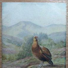 Postales: POSTAL DE 1906. Lote 143348598