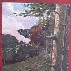 Postales: POSTAL DE 1909. Lote 155432566
