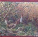 Postales: POSTAL DE 1909. Lote 155432646