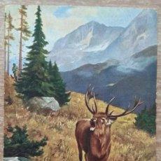 Postcards - POSTAL DE 1903 - 160471298