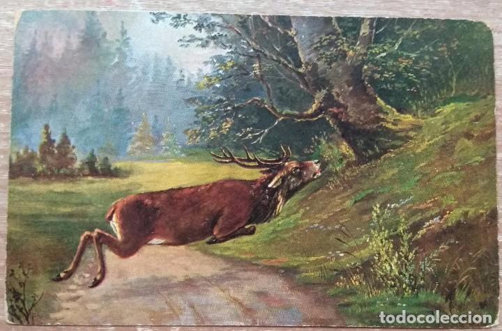POSTAL DE 1903 (Postales - Postales Temáticas - Dibujos originales y Grabados)