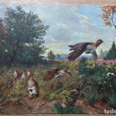 Postales: POSTAL DE 1909. Lote 168693844