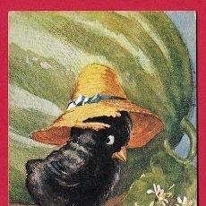 Postales: AE836 PAJARO POLLITO HUMANIZADO CON SOMBRERO DE PAJA MUY ORGULLOSO DE SU SANDIA Y DE SUS FLORES. Lote 190835811