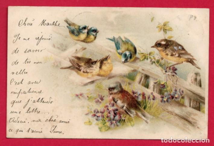 AB170 ANIMALES PAJAROS AVES CANTANDO SOBRE UNA BARRERA DE VIOLETAS POSTAL CON FECHA DE 1901 (Postales - Postales Temáticas - Dibujos originales y Grabados)