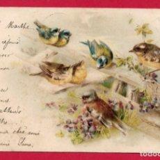 Postales: AB170 ANIMALES PAJAROS AVES CANTANDO SOBRE UNA BARRERA DE VIOLETAS POSTAL CON FECHA DE 1901. Lote 194990860
