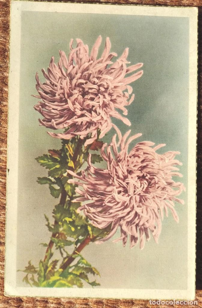 FLORES - EDITORIAL C Y Z - 528 (Postales - Postales Temáticas - Dibujos originales y Grabados)