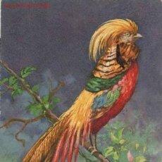 Postales: POSTAL DE FAISAN UN MARAVILLA DE POSTAL. Lote 1936705