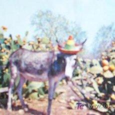 Postales: AÑOS 70-SIN CIRCULAR-CAMPO DE CHUMBERAS-ESCRITA-. Lote 20301414