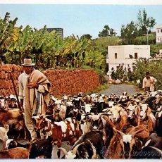 Postales: ISLAS CANARIAS. COLORES DE CANARIAS. . Lote 28731295