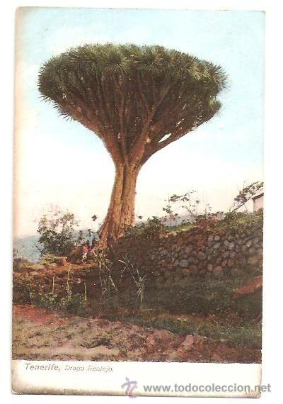 POSTALES POSTAL TENERIFE AÑOS 1900-EDITA UNION POSTAL UNIBVERSAL SIN CIRCULAR (Postales - España - Sin Clasificar Moderna (desde 1.940))