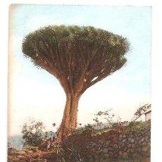 Postales: POSTALES POSTAL TENERIFE AÑOS 1900-EDITA UNION POSTAL UNIBVERSAL SIN CIRCULAR. Lote 49860436