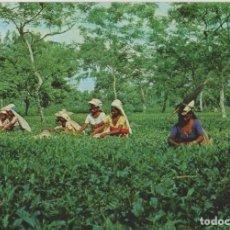 Postales: POSTALES POSTALMEGHALAYA INDIA RECOLECCION DE TE AÑOS 60-70. Lote 124404875