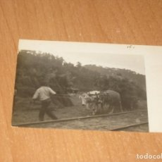 Postales: POSTAL DE BUEYES. Lote 161936626