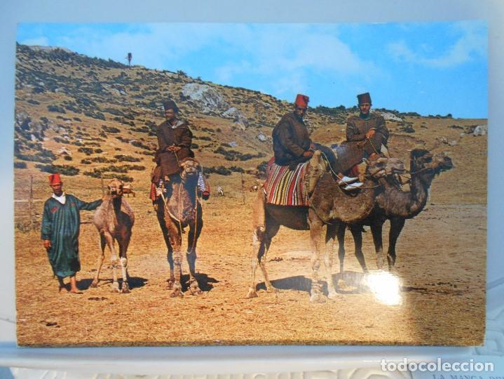 MARRUECOS. CAMELLEROS. POSTAL. (Postales - España - Sin Clasificar Moderna (desde 1.940))