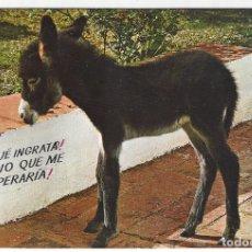 Postales: ESPAÑA ES DIFERENTE - 409.- BURRO ESPAÑOL. Lote 173642135